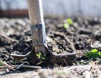 Zakładanie ogrodów 2